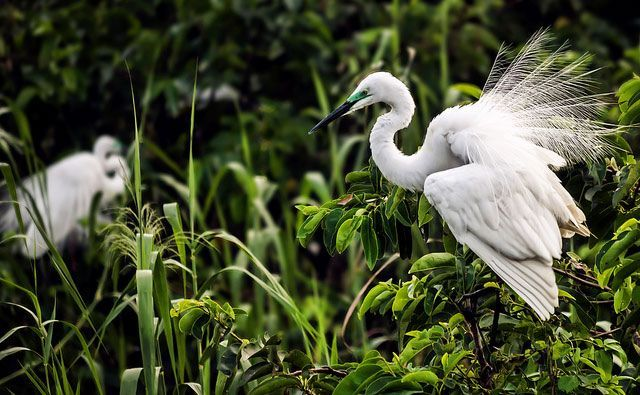 Bird Watching Tour in Kerala