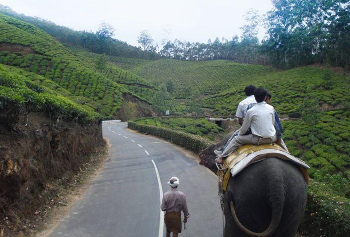 Elephant Safari in Munnar