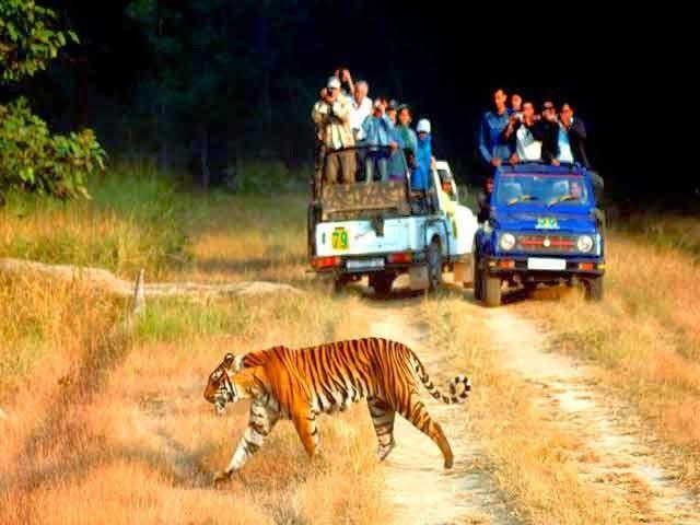 Corbett National Park, Uttarakhand
