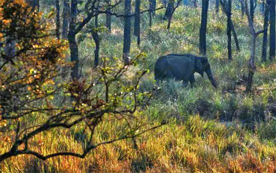 Mudumalai National Park in India