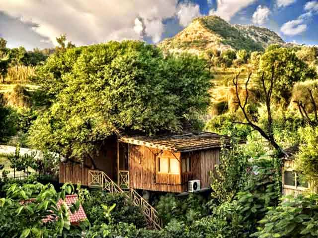 Tree House Resort in Jaipur