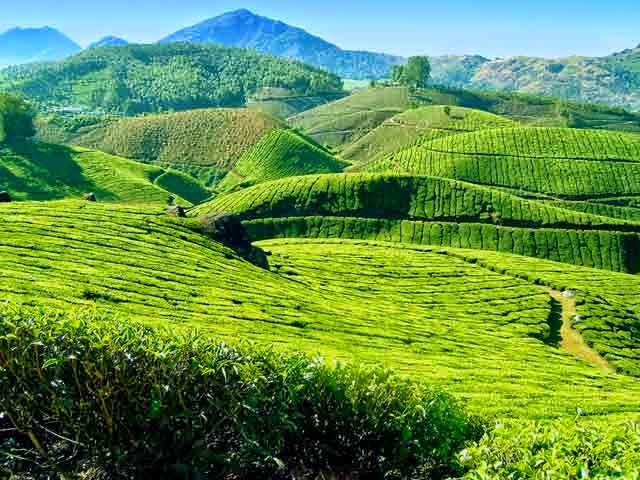 Munnar Honeymoon Tour