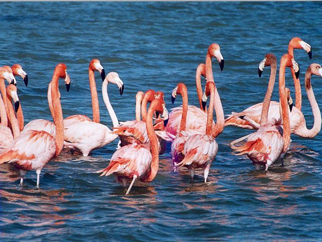Nalsarovar Bird Sanctuary, Gujarat