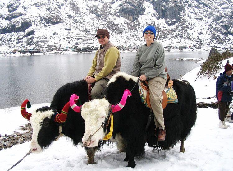 yak rides