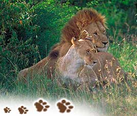 About Gir National Park