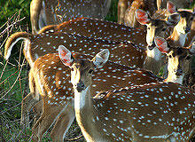 Karnataka Wildlife Tour