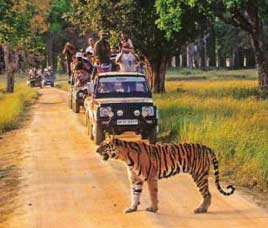 Tiger Safari Tours to India