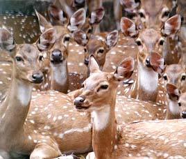 http://www.indianholiday.com/images/wildlife-sanctuaries-in-india/narayan-sarovar.jpg