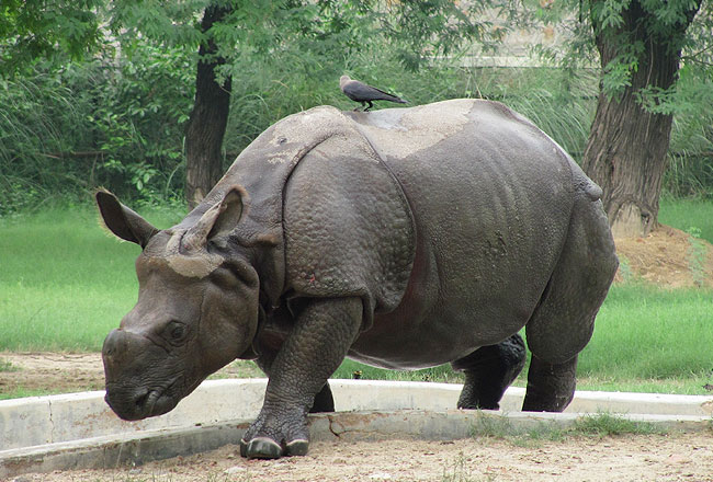 Photo Gallery Of Delhi Zoo Explore Delhi Zoo With Special