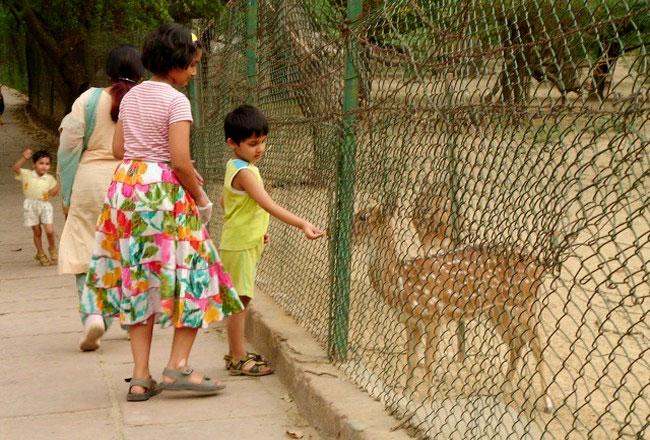 Deer Park In Delhi Deer Park Images