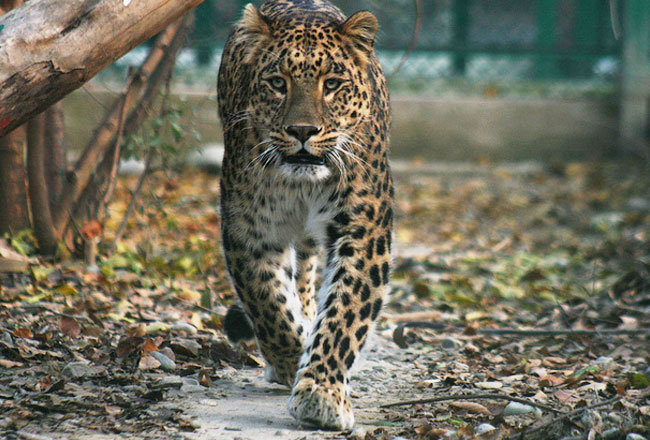 wild life century Popular wildlife sanctuaries in the state of kerala nestled in the elaborate forest of the western ghats or sahyadri ranges in kerala has fourteen wildlife.