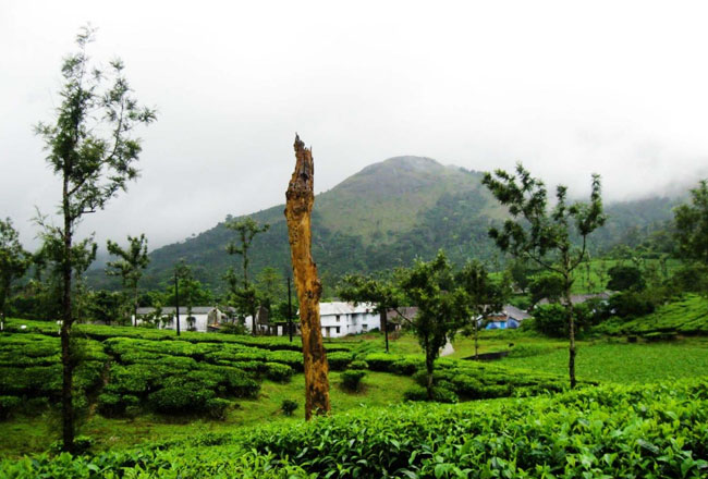 Photo Gallery Of Nelliyampathy Hill Station Explore Nelliyampathy Hill Station With Special
