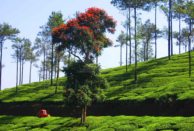 Photo Gallery Of Hill Stations In Kerala Explore Hill