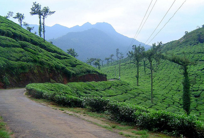 Photo Gallery Of Wayanad Hill Station Explore Wayanad Hill Station With Special Attractive Real