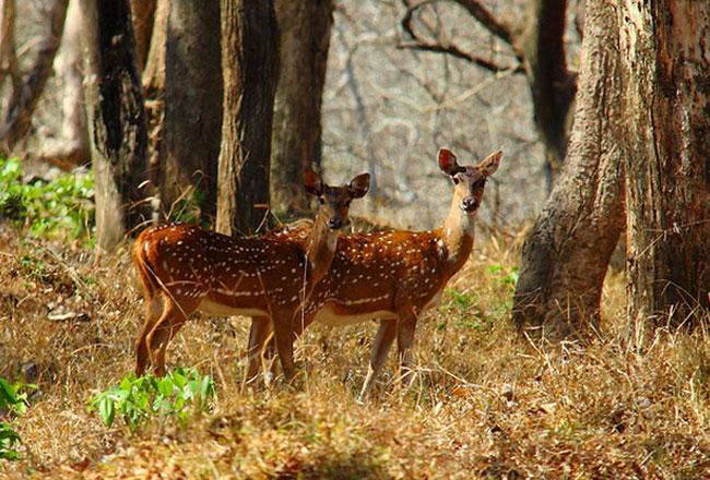 Indira Gandhi National Park Indira Gandhi National Park
