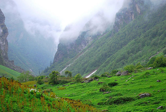 Photo Gallery Of Valley Of Flowers National Park In