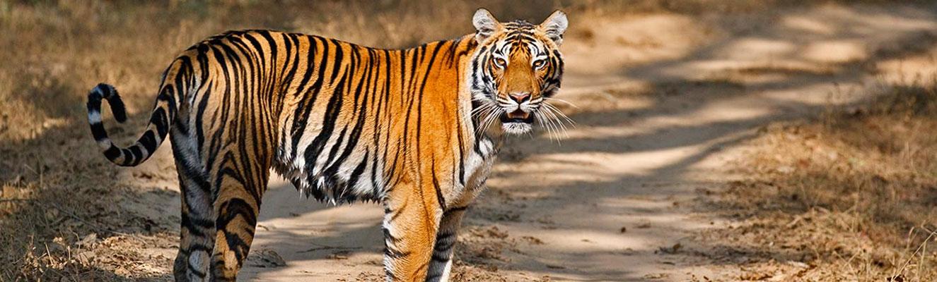 Kanha India  city photos : home best of india wilderness kanha national park madhya pradesh kanha ...