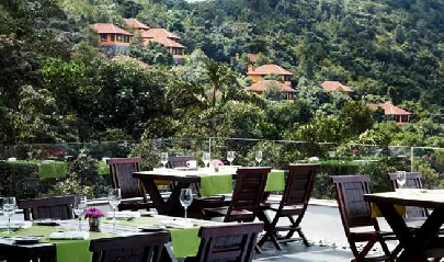 Alfresco-dining-at-the-Ferntree