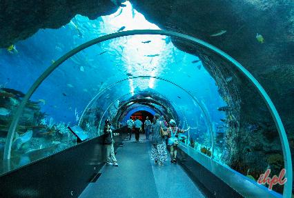 Aquarium in singpore