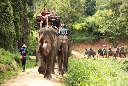 Elephant ride at the elephant camp, Krab