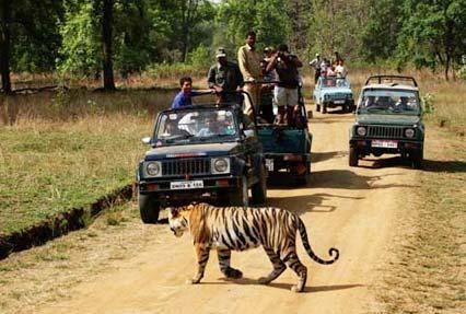 bandhavgarh national park 3