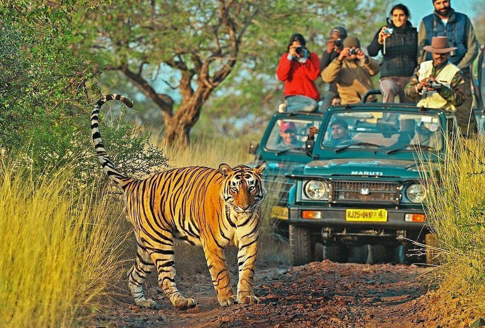 Short-escape-to-Jaipur-with-Ranthambore