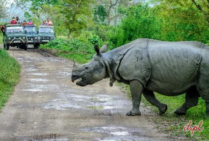 jeep safari in Kaziranga National Park