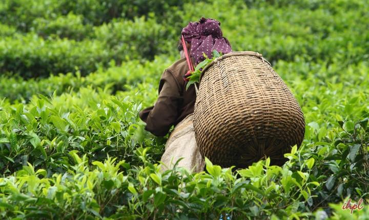 kerala-honeymoon-package-from-hyderabad-5
