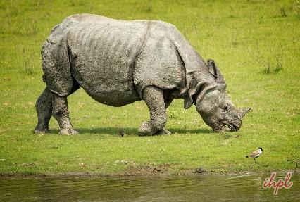 rafting in Jia Bhoroli river