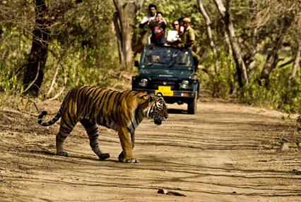 jim corbett national park in india