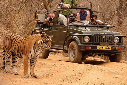 jeep safari ranthambore national park