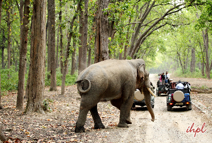 Jeep safari Corbett