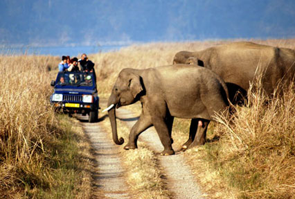 Book 13 Days Ranthambore And Jim Corbett Tour Package Wildlife Holiday In Rajasthan Ihpl