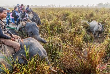 Kaziranga National Park Assam