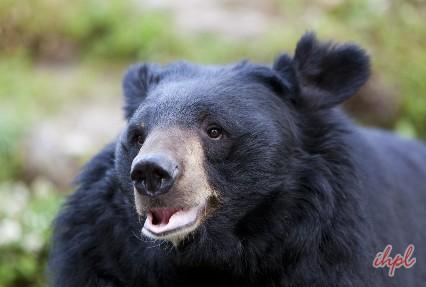 Zoological Park, Darjeeling