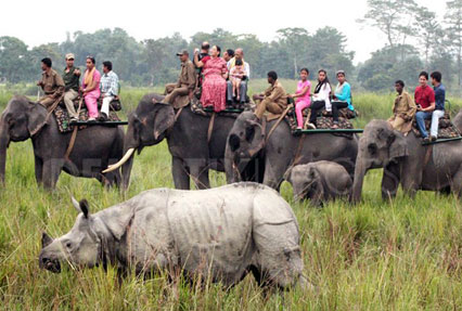 kaziranga national park in india