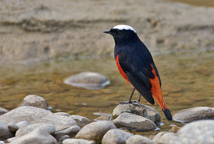 Bird in corbett