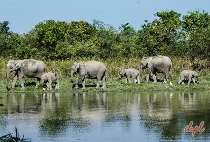 birding in assam