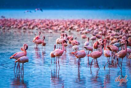 Lake Nakuru Lake in Kenya