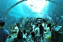 underwater aquarium in singapore