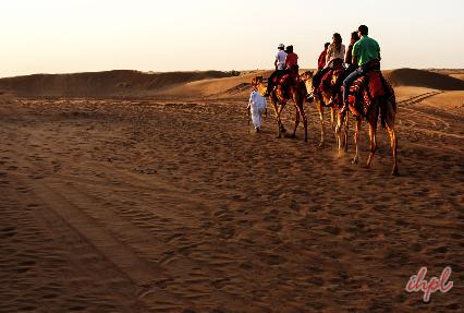 desert safari dubai best