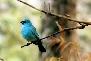 Bird in Corbett