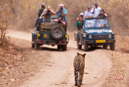 Resort in Bandhavgarh