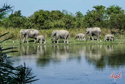 Elephant safari rides