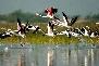 bharatpur bird sanctuarie