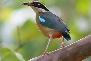 Bird in Pench
