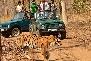 Jeep Safari in  Pench