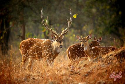 Gir Wildlife Sanctuary, Gujarat