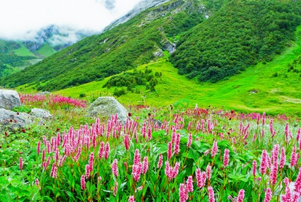 8 Days Valley Of Flowers With Hemkund Sahib Tour Package