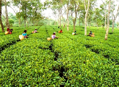 tea estate in Guwahati